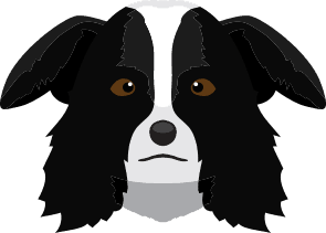 border collie dog grooming