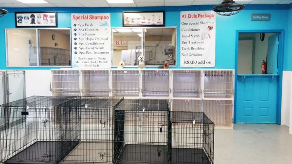 dog grooming sugar land